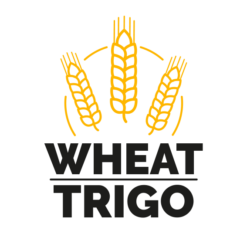 KIT WHEAT (TRIGO)
